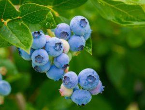 berries, blueberries, vitamins