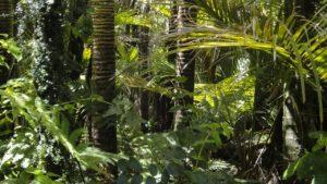 rainforest, palm trees, moss